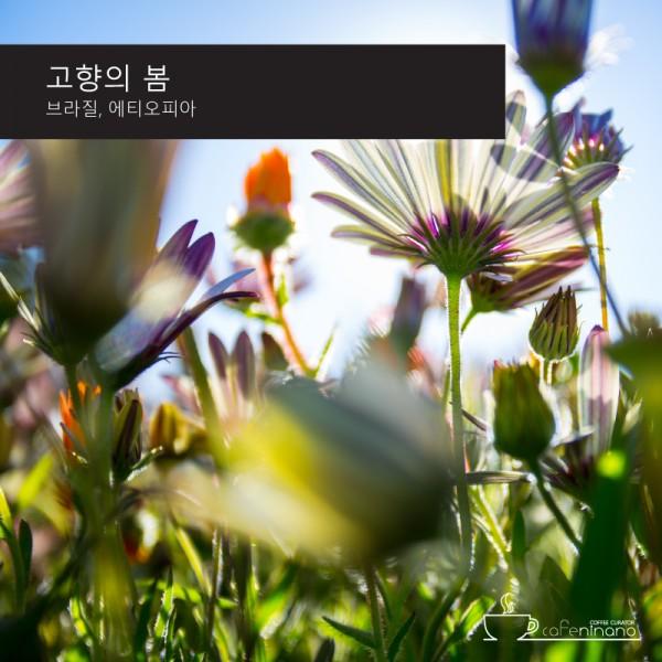 고향의 봄